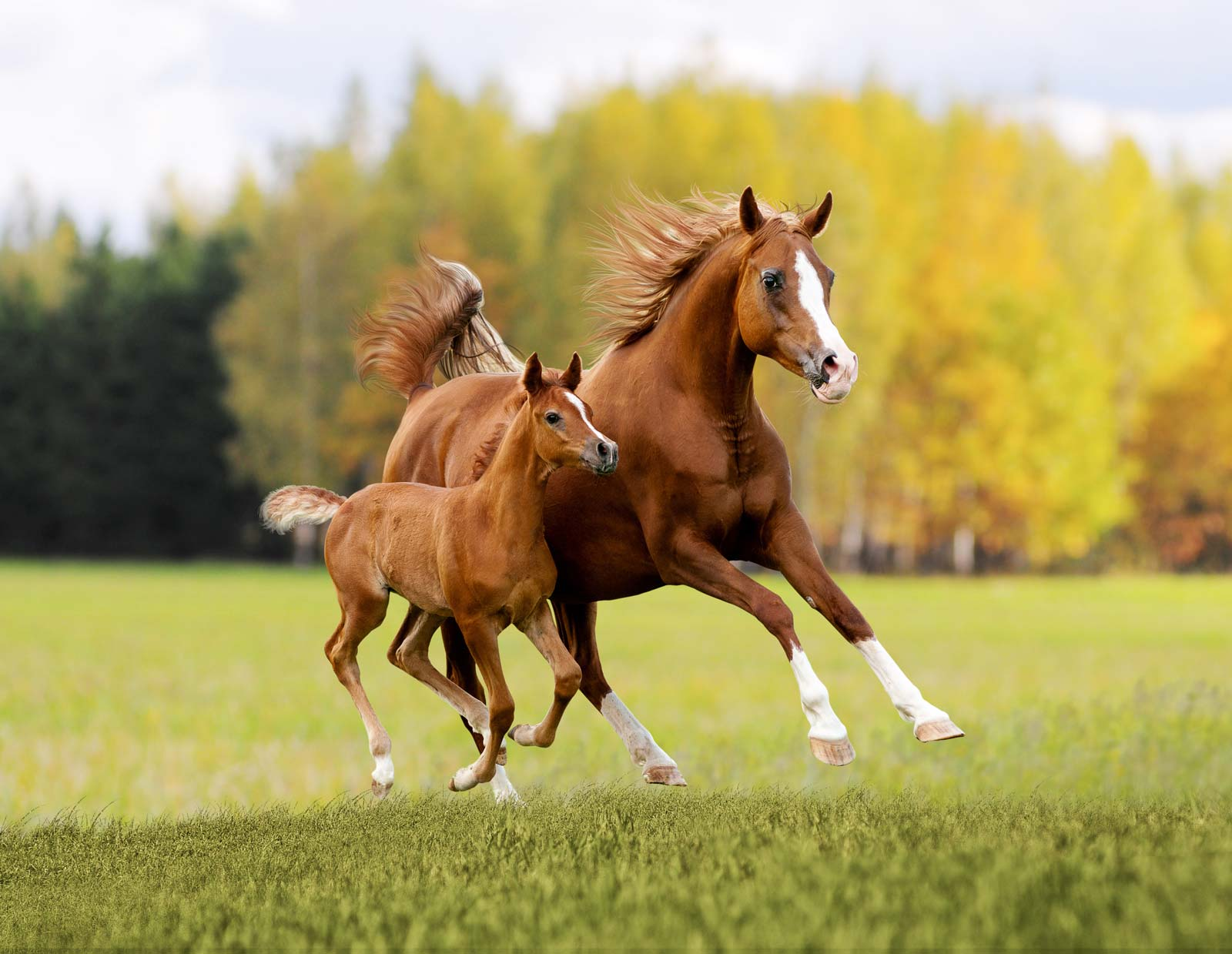 equine veterinary clinic medication articles