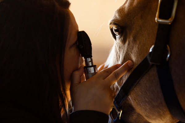 equine eye care for treatment of eye injury
