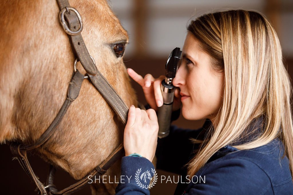 horse equine eye care for treatment of eye injury